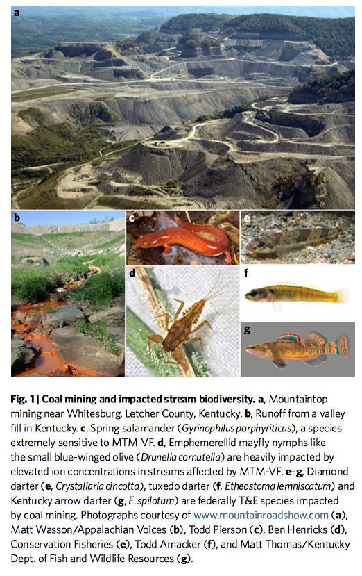 Stream organisms affected by coal mining operations