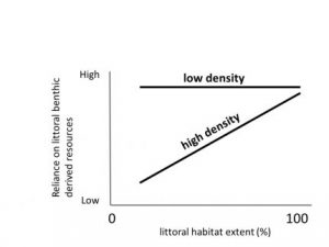 Graph depicting the reliance on littoral-benthic resources by rainbow trout. Small populations of trout will use the all of the littoral-benthic habitat. Large populations use more littoral-benthic resources as more habitat is available.